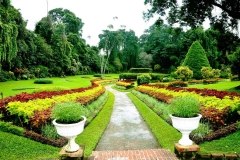 royal-botanical-gardens-peradeniya
