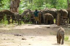 Udawalawa-National-Park-1