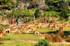 Wilpattu-National-Park-Day-Tour4
