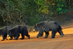 yala_nationalpark